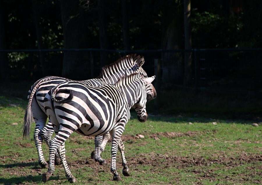1_Tierpark