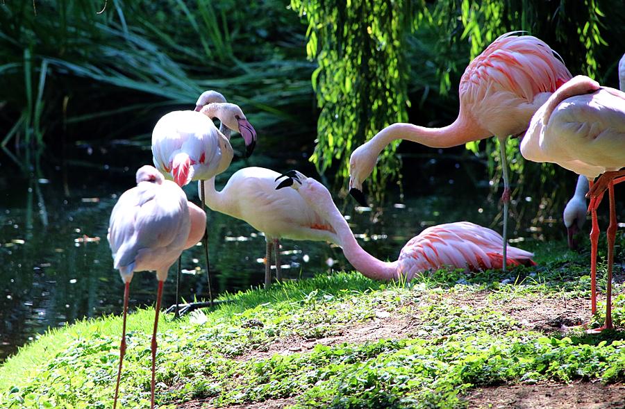 2_Tierpark