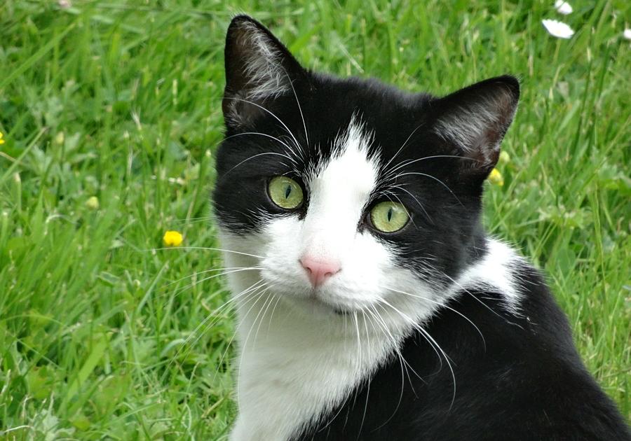 Katze Black_White_1