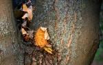 Versteck der Blätter
