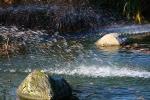 Wasser_Teich