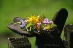 F_Hand voll Blüten