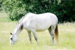 Ein weißes Pferd- für mich zauberhaft