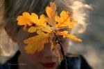Eichenblätter