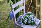 Bepflanzter Stuhl_lila