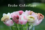 Frohe