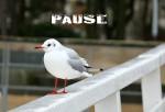O1_pause